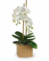 orchid plant nyc orchids plants by starbright voted nyc s best florist