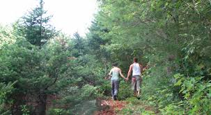 the pieropan christmas tree farm for a greener holiday