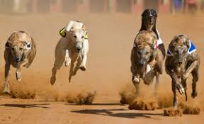 lifespan of a bluetick coonhound senate bill could put greyhounds at risk in kansas dogtime