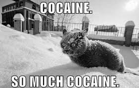 So Much Cocaine Meme - so much cocaine cat macros