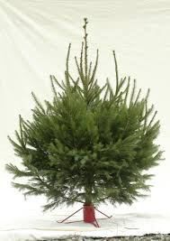 grand fir artificial tree classics