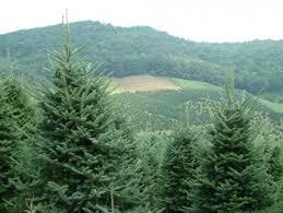 environmental issues nc trees