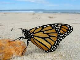 south carolina butterfly release
