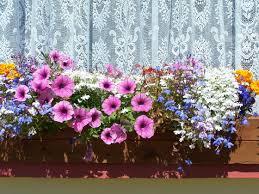 balkon blumen balkonblumen und sommerflor weitere pflanzen