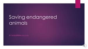 saving endangered animals by saquerrra and faith ppt download