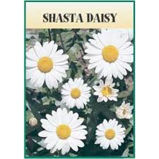 seed packets shasta seed packet logo imprinted 4allpromos
