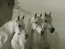 white mustang horse news u2013 white horses equestrian products
