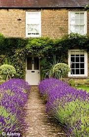2756 best garden modern country images on pinterest boxwood