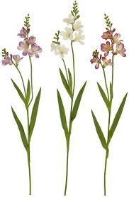 stem flowers 40 freesia stem 5130 flowers royale inc the of