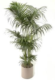 awesome house plant palm 91 palm house plant pictures tips and
