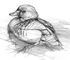 best 25 bird sketch ideas on pinterest bird drawings sketches