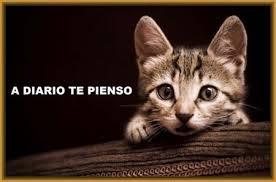 imagenes de gatitos sin frases imágenes tiernas de gatitos con frases de amor