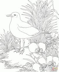 california state flag coloring page california state flower coloring page california gull and sego