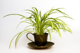 7 perfect indoor plants blog a garden floral