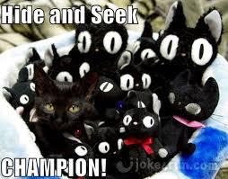 Clean Cat Memes - joke4fun memes hide and seek