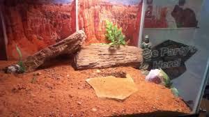 horned lizard setup and care youtube