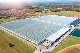 Fuels Backyard Get Together Mastronardi Produce Purchases New England Grower Backyard Farms