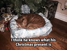 Cat Christmas Memes - cat s christmas present