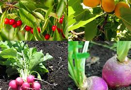12 fast growing vegetables and fruit trees for your home garden
