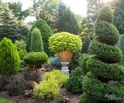 evergreen trees foundation planting ground covering and evergreen