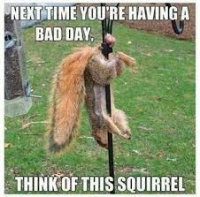 Squirrel Nuts Meme - squirrel hung by the balls imgur