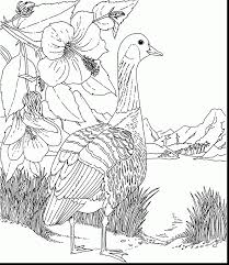 astonishing hawaiian shirt coloring page with hawaiian coloring