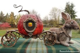 cinderella carriage pumpkin pumpkin coach and needle felted rabbit beneath the ferns