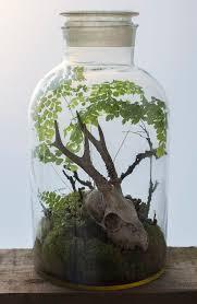 maidenhair fern terrarium google search art ideas pinterest