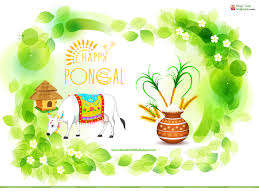 happy pongal wallpaper hd pongal wallpapers happy