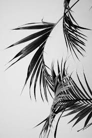 white and black wallpaper inspirations pinterest wallpaper plants and photography
