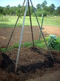 bean teepees variety in small spaces ozark homesteader