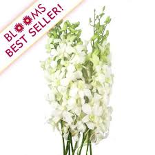 wholesale orchids u2013 orchid flowers for diy weddings