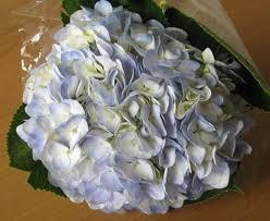 common wedding flowers wedding flowers defining wholesale pricing