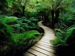 Green Plants Hd Serene Nature Green Plants Wide Mobile Wallpaper Download
