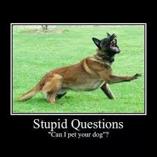 belgian malinois markings 51 best malinois humor etc images on pinterest animals