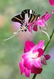 mariposa garden critters butterfly moth animal