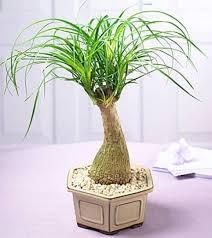 12 indoor plants you can t kill apartment geeks