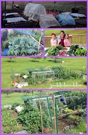 Companion Vegetable Garden Layout by Are You A Gardener Grounded U0026 Surrounded