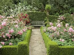rose garden with wooden bench and boxwood stunning rose garden