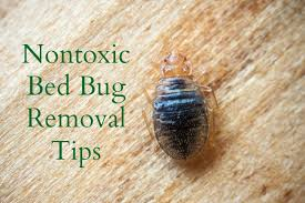 What Kills Bed Bugs Naturally Natural Ways To Eliminate Bed Bugs The Healthy Home Economist