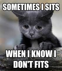 Talking Cat Meme - proud mom 30th october 2014 cat fur babies and adorable animals