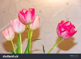 beautiful bunch tulip flowers pink bouquet stock photo 369142532
