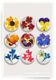 pressed flowers ben s garden 9 pressed flower superstrong glass magnet set