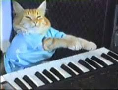 keyboard cat wikipedia