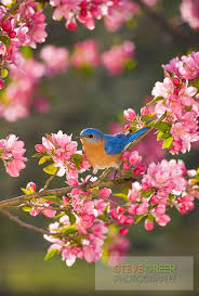Flower And Bird - 3791 best small flowers and birds images on