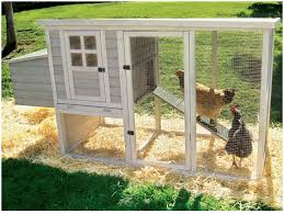 Plans For Sale Backyards Fascinating Backyard Chicken Coops Designs Backyard