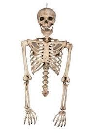 posable skeleton posable skeleton torso prop 371564 trendyhalloween