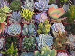 Unique Planters For Succulents by 6 Unique Succulent Plants Terrarium Projects Succulent Favors