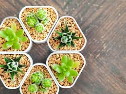 Small Self Watering Pots Self Watering Modular And Magnetic