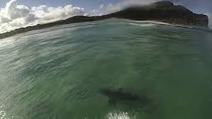 Which Flashing Light Tells You To Enter A River Lock Cellito Surfer Swims Over A Monster Shark Daily Mail Online